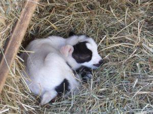 naissances dans un zoo