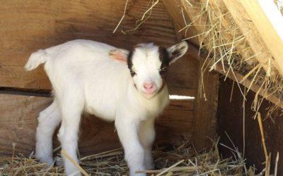 Les naissances 2020 au parc zoo du Reynou