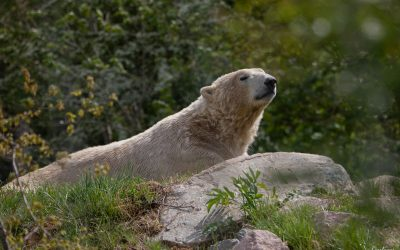 Réouverture du Parc Zoo du Reynou